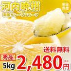 河内晩柑 文旦 みかん 送料無料 秀品 5kg M〜2L お取り寄せ 和製グレープフルーツ 熊本県産 ジューシーオレンジ 美生柑
