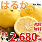 はるか みかん 送料無料 秀品 5kg M〜2L 平成生まれの新品種 はるかみかん ミカン 蜜柑