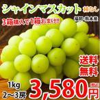 シャインマスカット ぶどう 送料無料 1kg 2〜3房 3箱購入で1箱おまけ 福岡・熊本県産 マスカット 葡萄 ブドウ