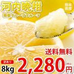 河内晩柑 みかん 和製グレープフルーツ 訳あり 晩柑 8kg S〜3L 送料無料 熊本県産 文旦 ジューシーオレンジ 美生柑