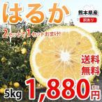 はるか みかん 訳あり 5kg S〜2L 送料無料 熊本県産 2箱購入で1箱おまけ 平成生まれの新品種 はるかみかん 上品な甘みと香り ミカン 蜜柑