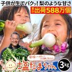 TVで話題のたまねぎ 熊本県産 タマネギ 3kg 塩たまちゃん 塩玉ちゃん 塩玉ねぎ 玉ねぎ サラダたまねぎ お取り寄せ お取り寄せグルメ 農家直送 送料無料