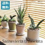 (送料無料) 現品発送 選べるサンセベリア 陶器鉢アレンジ / 観葉植物