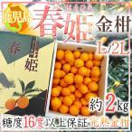 【送料無料】鹿児島県産 春姫 きんかん L〜2L約2kg