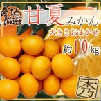 【送料無料】鹿児島県産 甘夏みかん L 約10kg