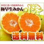 極早生みかん小冬10kg 送料無料 訳あり・不揃い フルーツ 果物 旬 くだもの わけあり 食品 ワケあり ふぞろい みかん 柑橘類 ミカン