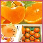 紅まどんな化粧箱入り3kg×2 合計6kg 送料無料 フルーツ 果物 旬 くだもの 食品 ギフト おやつ 紅マドンナ みかん 柑橘類 ミカン 産地直送