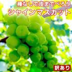 シャインマスカット 訳あり 約1kg〜1.2kg(目安1〜4房) ご家庭用 送料無料 フルーツ 食品 葡萄 ふぞろい わけあり 皮ごと食べれる 種なしぶどう 果物 旬 くだもの
