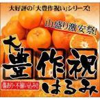 大豊作祝いはるみ 5kg 送料無料 不ぞろい 訳あり【2月中旬発送予定】フルーツ 果物 くだもの 柑橘類 ミカン