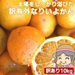 愛媛産 ご家庭用 農家さんもぐもぐ 外なり訳ありいよかん 10kg(+約0.5kg多め) 伊予柑 不揃い 傷 汚れ有 フルーツ 果物 くだもの みかん 柑橘類