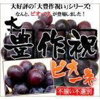 大豊作祝いのピオーネ【不選別・不揃い】訳あり【送料無料】ぶどう 葡萄 フルーツ 果物 旬 くだもの わけあり 食品 ワケあり ふぞろい 果実