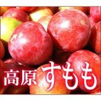 愛媛産 高原のすもも 訳あり 約1.4kg【クール便送料無料(一部地域除く)】不揃い 愛媛県産 スモモ 李 酢桃 プラム フルーツ 旬の果物 くだもの