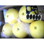 晩白柚(ばんぺいゆ)5玉大 熊本特産 2Lサイズ