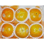 【送料無料】熊本産 太秋柿 2L一般サイズ 6玉化粧箱入
