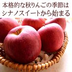 りんご リンゴ 林檎 シナノスイート ギフトに使えるりんご シャキシャキで甘味の強い長野県産[シナノスイート16玉]10月中旬頃からの発送です【送料無料】