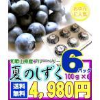 和歌山県産 高糖度 ブルーベリー [夏のしずく6パック] 7月初旬より出荷開始【お中元】【送料無料】