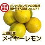 送料無料(三重県産 メイヤーレモン 1kg)防腐剤・ワックス不使用レモン 防ばい剤不使用レモン レモン 国産レモン 青果