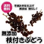 送料無料 無添加 種なし大粒 (枝付ぶどう 160g 80g×2パック)ドライフルーツ レーズン レーズン ぶどう ブドウ