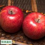 青森産 りんご サンふじ A品 10kg箱 特別栽培 (青森県 阿部農園) 産地直送