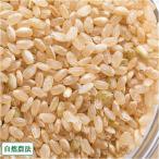 お米 新米 農薬不使用(無農薬) つがるロマン 玄米 10kg 自然農法 (青森県 阿部農園) 産地直送