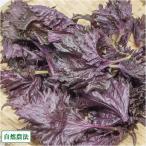 【クール便】 赤しそ 枝なし 400g 自然農法 (青森県 アグリメイト南郷) 産地直送