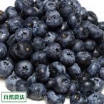 【クール便・訳あり】生ブルーベリー 2kg 自然農法 (青森県 アグリメイト南郷) 産地直送