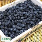 【加工用】生ブルーベリー 1kg×2箱 自然農法 (青森県 アグリメイト南郷) 産地直送【クール料金込み】