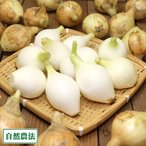 【セール】玉ねぎ 3kg (2S〜3Sサイズ) 自然農法 (兵庫県淡路島 花岡農恵園) 産地直送