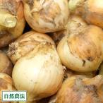 農薬不使用(無農薬) タマネギ 玉ねぎ3kg (サイズ混合S〜L) 自然農法 (兵庫県淡路島 花岡農恵園) 産地直送