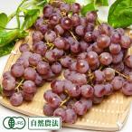 【家庭用】甲州 2kg×2箱 自然農法 (山形県 稲泉農園) ぶどう 産地直送