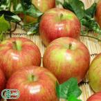 【家庭用】有機りんご サンふじ 10kg箱 有機JAS (青森県 北上農園) 産地直送