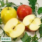 無・無 サンふじ 黄りんご 2色セット A品 小玉 10kg箱 特別栽培 (青森県 北上農園) 産地直送
