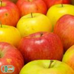 【家庭用】有機サンふじ 黄りんご 2色セット 5kg箱 有機JAS (青森県 北上農園) 産地直送