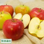 【訳あり】無・無 サンふじ 黄りんご 2色セット 小玉 5kg箱 特別栽培 (青森県 北上農園) 産地直送