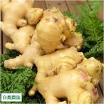 農薬不使用(無農薬) ショウガ 生姜 1kg 自然農法 (岡山県 ラブラール美作 石田農園) 産地直送
