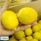 ショッピング皮 [セール]レモン A・B品混合 5kg (広島県 道谷農園) 自然農法 無農薬柑 送料無 産地直送 訳あり