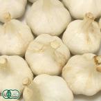 農薬不使用(無農薬) 乾燥にんにく 福地ホワイト六片種 2kg オーガニック (青森県 中里町自然農法研究会) 産地直送