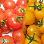 【クール冷蔵便】 有機 ミニトマト 赤・黄2色セット 150g×4パック 有機JAS (青森県 自然食ねっと青森) 産地直送