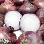 有機 紫玉ねぎ 3kg 有機JAS (北海道 ノザワ農場)