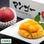 【クール冷蔵便】アーウィン 秀品2kg 自然農法 (沖縄県 沖縄マンゴー生産研究会) 産地直送 アップルマンゴー