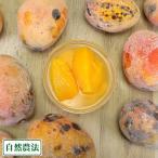 【訳あり・加工用】 丸ごと冷凍マンゴー 2kg 自然農法 (沖縄県 沖縄マンゴー生産研究会)