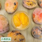 【訳あり・加工用】 丸ごと冷凍マンゴー 4kg 自然農法 (沖縄県 沖縄マンゴー生産研究会)