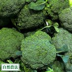 ブロッコリー 約3kg 自然農法 (沖縄県 大宜味農場) 産地直送