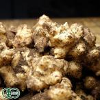 有機JAS 菊芋 1kg(熊本県 株式会社ろのわ) 無農薬 送料無料 産地直送 オーガニック