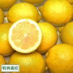 広島県レモン A品 10kg 特別栽培 (広島県 セーフティフルーツ) 農薬不使用 産地直送