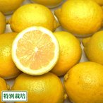 ショッピング広島 広島レモン A品3kg(広島県 セーフティーフルーツ)農薬、化学肥料不使用・ノーワックス・送料無料・産地直送