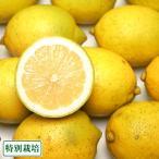 ショッピング広島 【訳あり】広島県レモン 5kg 農薬使用無 (広島県 セーフティフルーツ) 産地直送