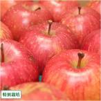 ふじ 訳あり5kg箱(14〜23個)(青森県 さいとうりんご園)特別栽培減農薬りんご・送料無料・産地直送・お徳用