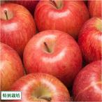 【セール】りんご ふじ 家庭用 5kg箱 特別栽培 (青森県 さいとうりんご園) 産地直送 訳あり