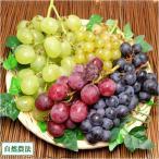 【セール】3種のぶどうセット 約2kg 自然農法 (山形県 佐久間権左衛門) 産地直送